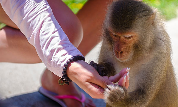 Fireflies And Monkey Feeding Tour